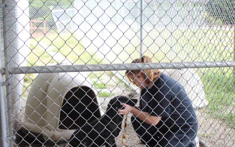 Megan Broome/The Clayton Tribune. Paws 4 Life Humane Shelter volunteer Kylie Wells cares for Bernie, a stray animal housed at Paws, on Tuesday.